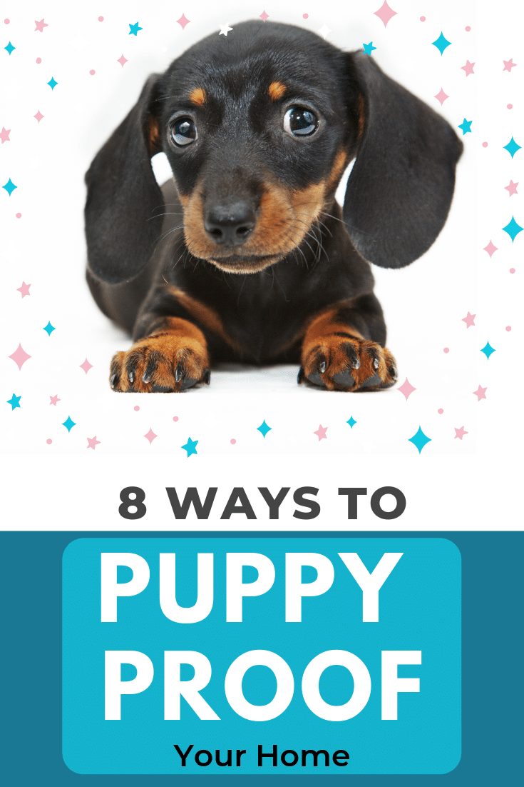 Puppy Proofing your Home