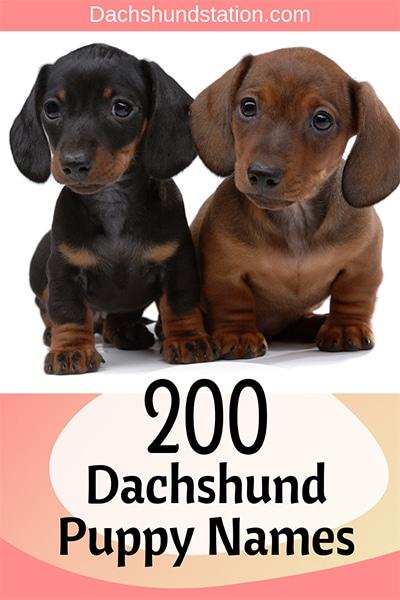 Best Dachshund Names Of 2021