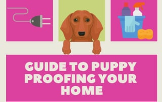 guide to puppy proofing your home