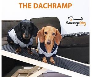 dachshund ramp