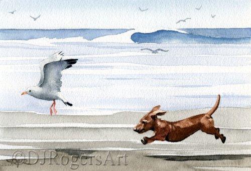 Dachshund Running at the Beach