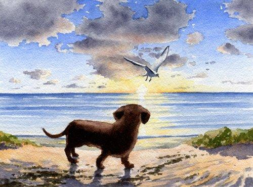 Dachshund at the Beach