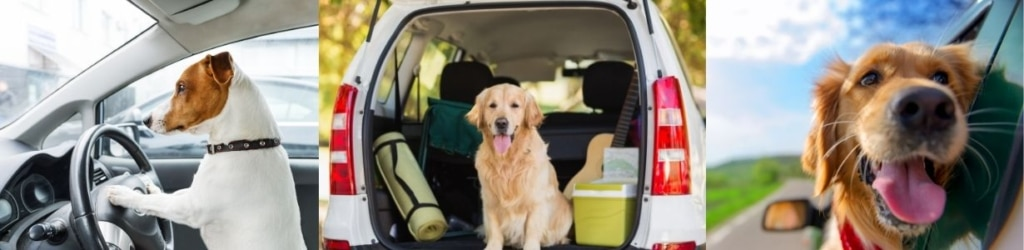 6 Proven Ways to Stop Car Sickness in Dogs