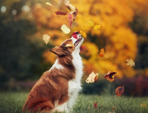 7 Fall Activities On Your Dog's Bucket List