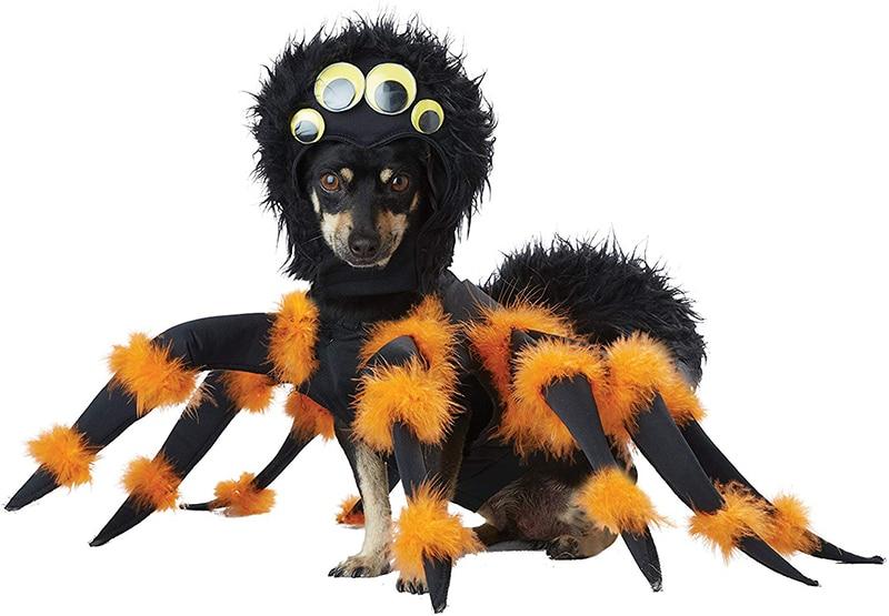 Dachshund Halloween Costumes spider