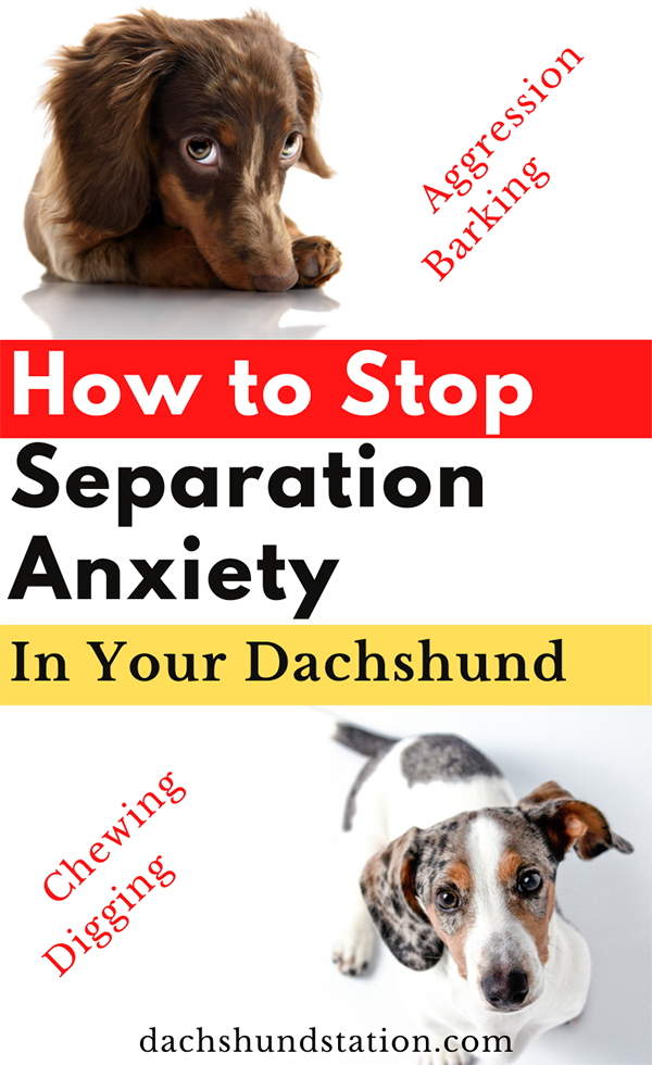dachshund behavior problems