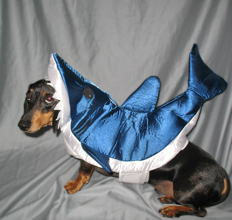 Dachshund Halloween Costumes