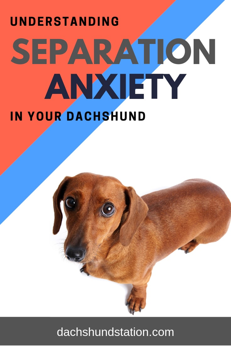 Stop Dachshund Behavior Problems