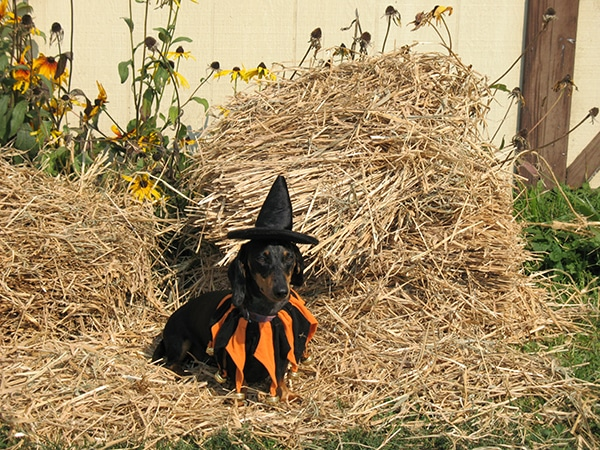 Fall Activities on your dog's bucket list