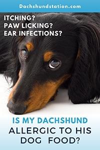 dachshund allergies