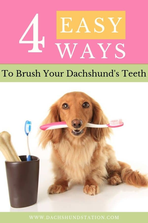 dachshunds have bad breath