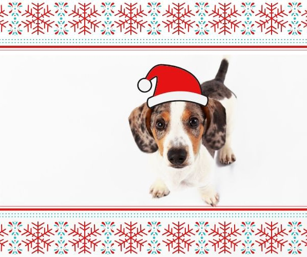 10 Cute Holiday Gifts For Your Dachshund