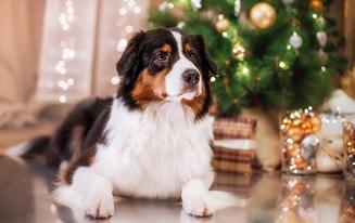 dog gift ideas stem