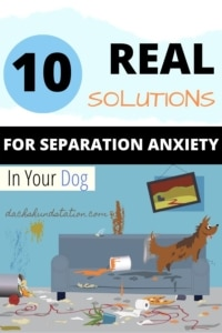 Real Solutions For Dog Separation Anxiety