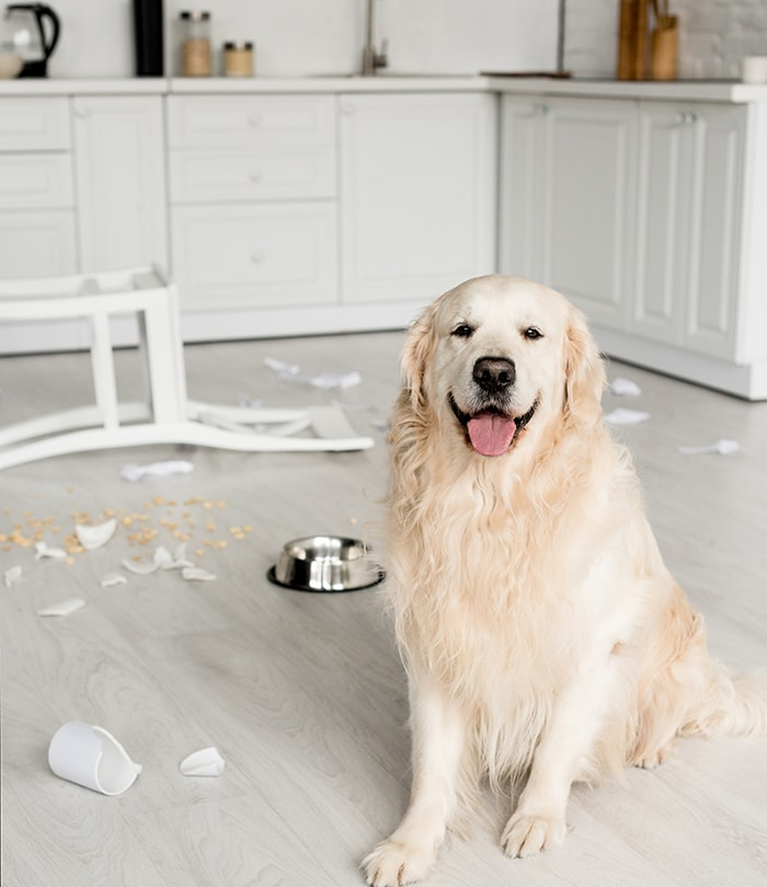 Dog Separation Anxiety Solutions
