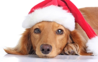 holiday gift guide dogs