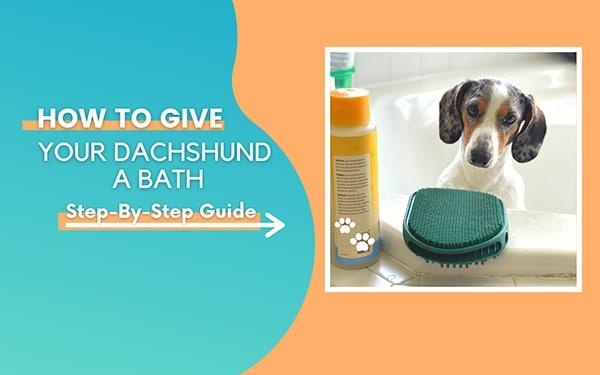 Dachshund Puppy Guide
