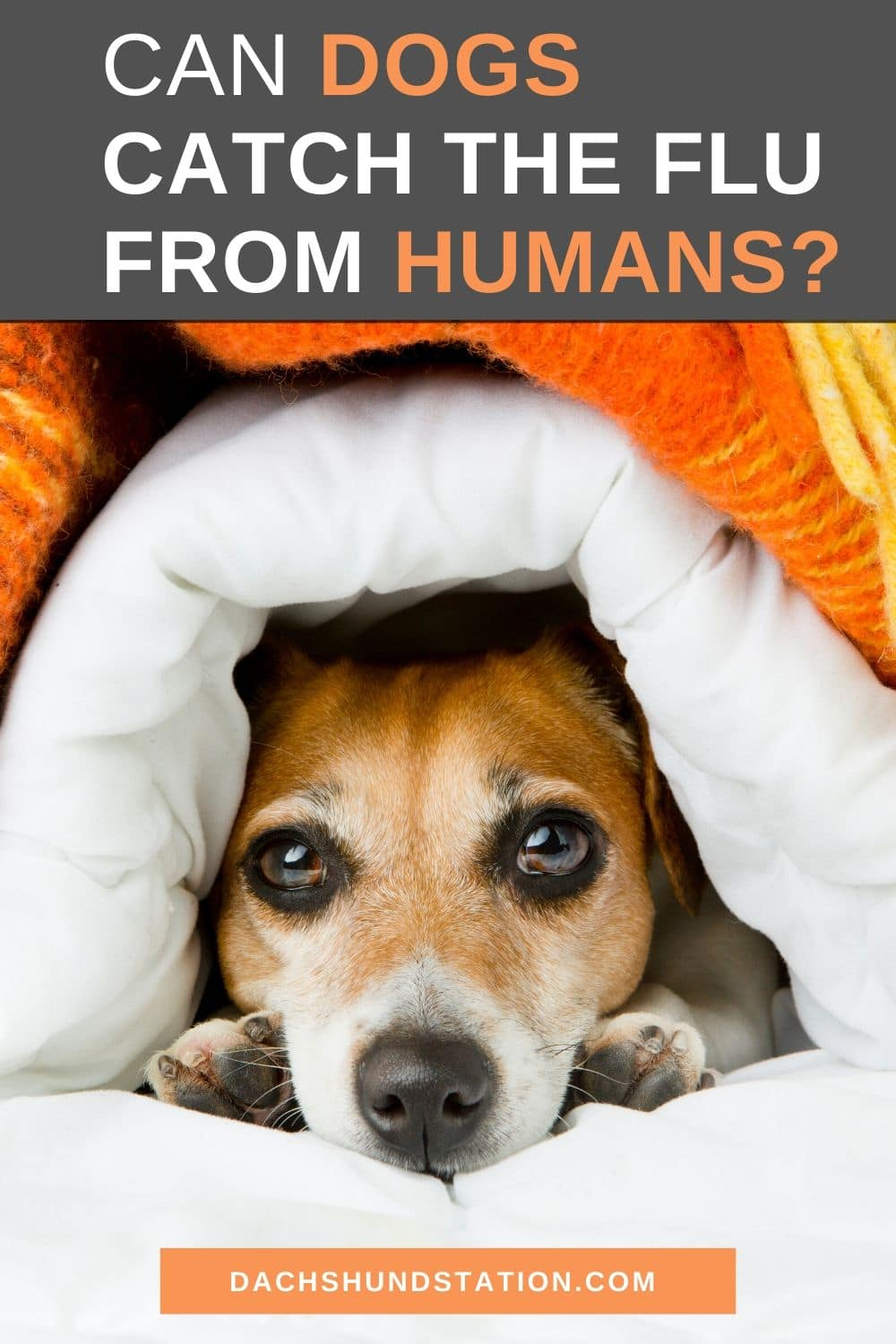 5 Diseases You Can Spread To Your Dog