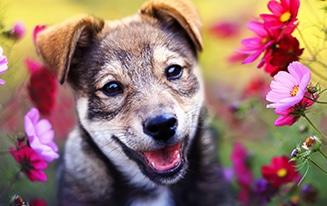 dog-safe flowers