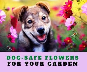Dog Safe Flowers for Your Garden