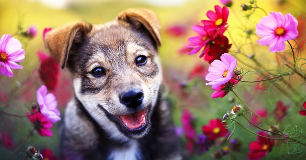 dog safe flowers