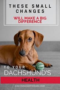 healthy dachshund tips