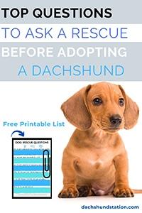 Adopting a Dachshund
