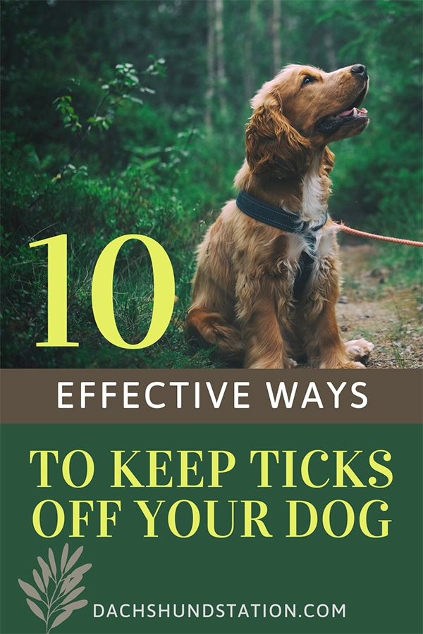 8 Effective Ways to Keep Ticks Off Your Dog