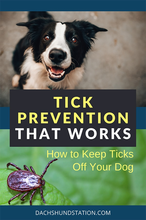 ticks on dogs prevention