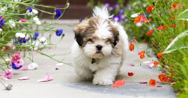 ways to keep ticks off your dog
