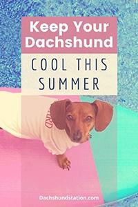 cool dachshund summer