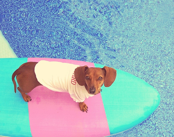 Cool Your Dachshund Down in Summer