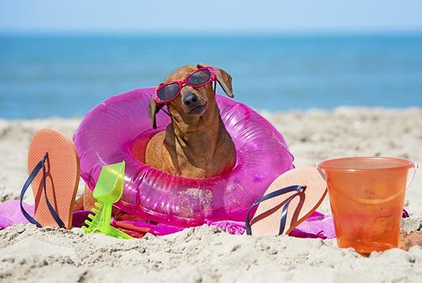 dachshund beach sunscreen
