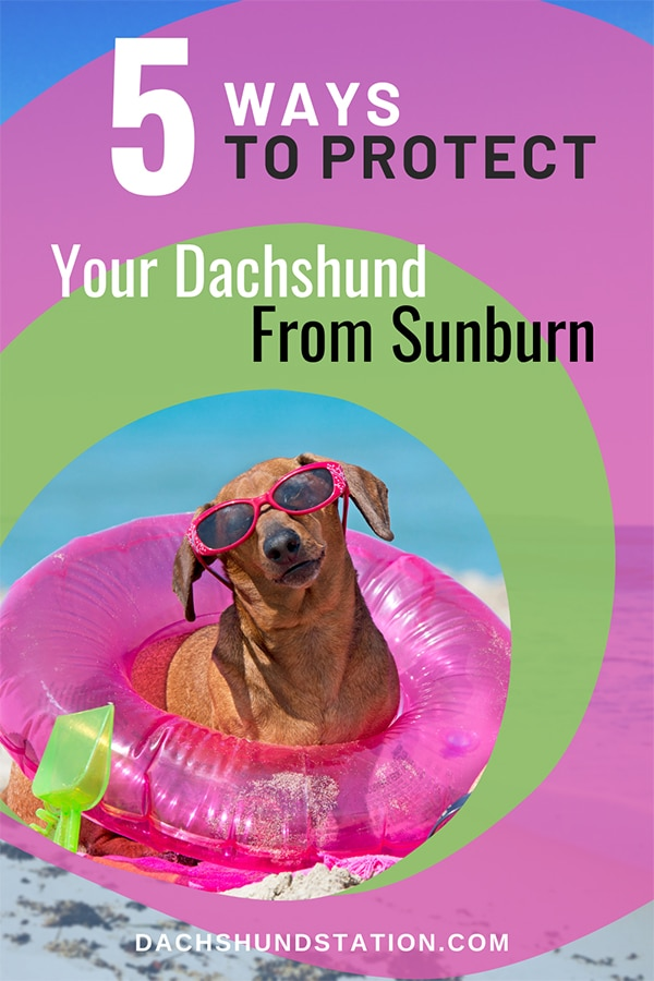5 Ways to Protect Your Dachshund From The Sun