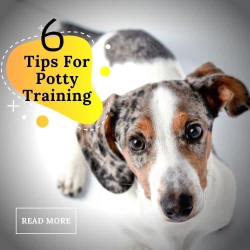 dachshund dog potty training