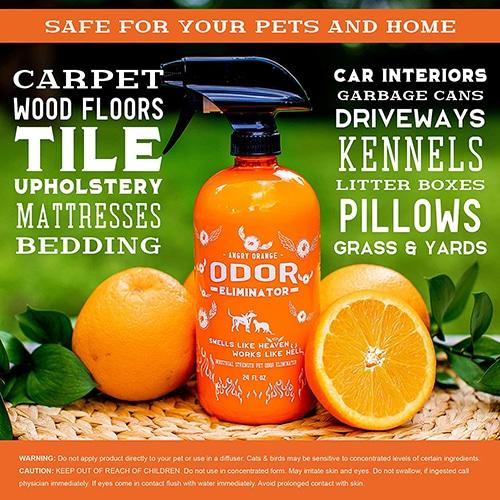 Dachshund Puppy Essentials