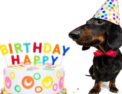 7 Simple Ways to Celebrate Your Dachshund's Birthday