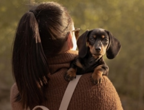Best Dachshund Gift Ideas For Women: Doxie Mom
