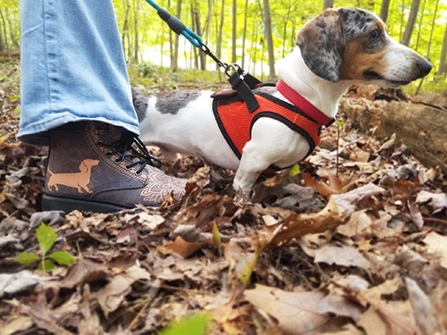 Take Your Dachshund Hiking