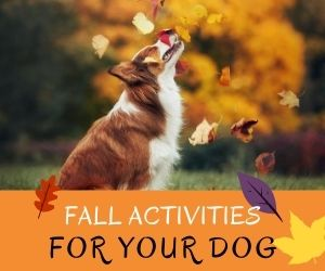 Fall Activities For Your Dog