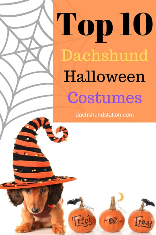 halloween costumes for dachshunds