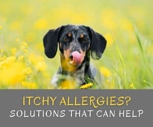 Itchy Allergies?