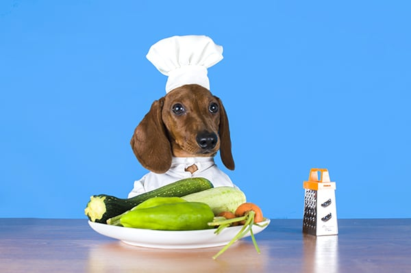 Dog Food Recipe For Your Dachshund